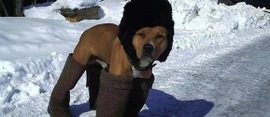 Dog-dressed-in-boots-580x250